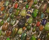 Scarabées de beaucoup de couleurs, Insectarium de Montréal Photographie stock libre de droits