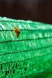 Scarabées sur le vert Photographie stock libre de droits
