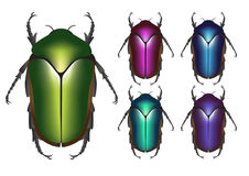 Scarab. Egyptian scarab Beetle illustration in 5 colour Royalty Free Stock Image