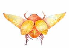 Scarab beetle. Egyptian symbol of the sun. Stock Photo