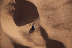 Scarab beetle in the sand Royalty Free Stock Images