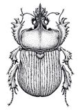 Scarab beetle tattoo. Dot work tattoo. Insect. Symbol of eternal life, resurrection, revival. Black and white drawing stock illustration