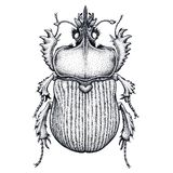 Scarab beetle tattoo. Dot work tattoo. Insect. Symbol of eternal life, resurrection, revival. Black and white drawing. Vector tattoo vector illustration