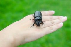 Scarab beetle on woman hand Stock Image