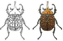 Scarab beetles Stock Photo