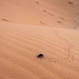 Scarab in desert Stock Images