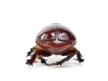 Scarab's back Royalty Free Stock Images