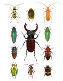 scarabei Immagini Stock Libere da Diritti
