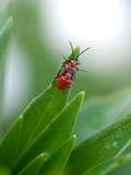 Scarabei dell'insetto sulle piante di una foglia di verde Immagini Stock Libere da Diritti
