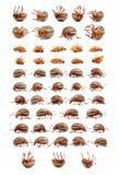 Scarabei di patata del colorado Fotografia Stock
