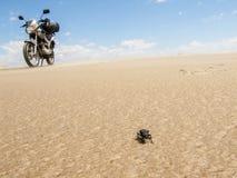 Scarabeo e motociclo fotografie stock