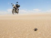 Scarabeo e motociclo immagine stock libera da diritti