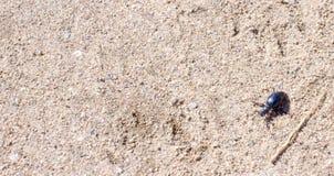 Scarabeo frantumato su sund, macro foto fotografia stock libera da diritti