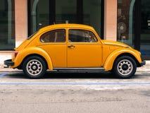Scarabeo giallo di Volkswagen Fotografia Stock
