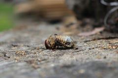 scarabeo interessante Fotografia Stock Libera da Diritti