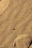 Scarabeo a strisce sulla sabbia Immagine Stock