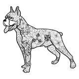 Scarabocchio del cane del pugile Immagini Stock