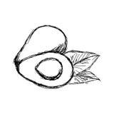 Scarabocchio di vettore dell'illustrazione disegnato a mano dell'avocado di schizzo illustrazione di stock