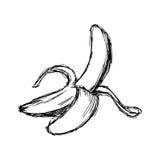 Scarabocchio di vettore dell'illustrazione disegnato a mano della banana di schizzo Fotografie Stock