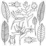 Scarabocchio disegnato a mano fissato con gli elementi tropicali Fotografia Stock