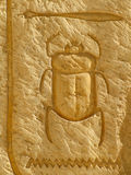 Scarabskalbagge Arkivbilder