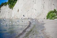 Scarborough блефует пляж Стоковая Фотография RF