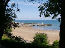 Scarborough beach framed by trees Royalty Free Stock Photos