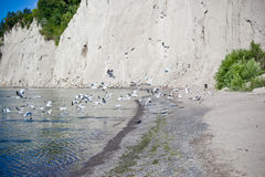Scarborough bluffs beach. And rock cliff surrounding royalty free stock photography