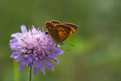 Scarce copper Royalty Free Stock Images