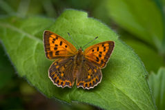 Scarce copper royalty free stock photography