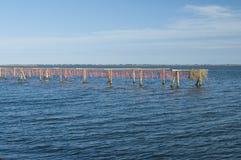 SCARDOVARI, WŁOCHY, 2016-08-06: Mussel kultywacja przy Scardovari laguną, Włochy Obrazy Royalty Free