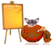 Scare cute chihuahua dog halloween menu Royalty Free Stock Images