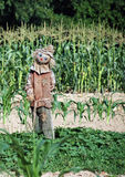 Scarecrow. A friendly scare crow in a corn field Stock Photo