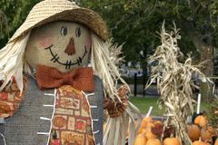 Scarecrow. With pumpkins and cornstalks in the background Stock Image