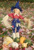 Scarecrow. A scarecrow among a field of leaves with some fall pumpkins at its feet Stock Photos
