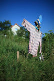 Scarecrow. On a field with vegetables royalty free stock image