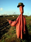 Scarecrow. On the field with pink jacket Royalty Free Stock Photo