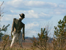 Scarecrow. A scarecrow in the field Stock Images