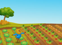 Scarecrow. Illustration of a scarecrow in a vegetable patch Stock Image