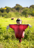 Scarecrow. A scarecrow, dressed in red, standing in a field Royalty Free Stock Photos