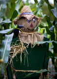 Scarecrow. Scaregrow standing in a field of fresh corn Royalty Free Stock Photography