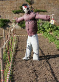 Scarecrow. In vegetable garden Royalty Free Stock Images