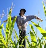 Scarecrow stock photos
