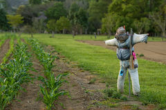 Scarecrow in Australia Royalty Free Stock Photography