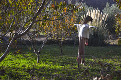 Scarecrow. Bird scarer in the middle of a vineyard royalty free stock photos