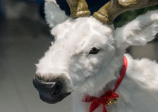 Scarecrow of a Christmas deer head close-up Stock Photography