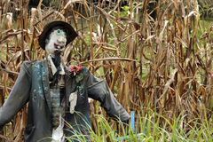 Scarecrow. A scarecrow among the corn Royalty Free Stock Image
