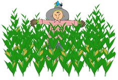 Scarecrow In A Corn Field. This illustration depicts a scarecrow in the middle of a corn field Royalty Free Stock Images