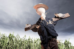 Scarecrow in corn field on a cloudy day stock images