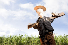 Scarecrow in corn field on a sunny day Stock Photos